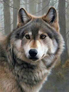 Wolf - Andrew Hutchinson is wildlife painting artist, specialized in realistic, wildlife illustrations Wildlife Paintings, Wildlife Art, Animal Paintings, British Wildlife, Wolf Photos, Wolf Pictures, Images Photos, Nature Animals, Animals And Pets