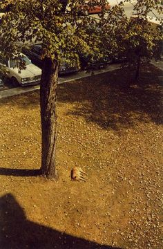 William Eggleston  View from the Courthouse Tower,  Morristown, Tennessee  1980s