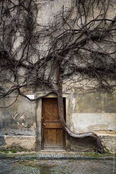 .Tree growing from wall