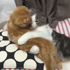 Petting Each Other