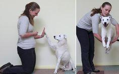 Abandonado por ser surdo, esse cão teve nova chance e aprendeu língua de sinais