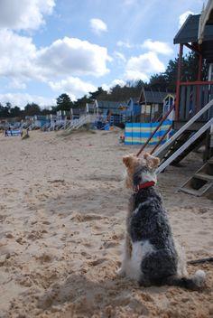 Wells next the Sea, Norfolk - beach hut heaven.