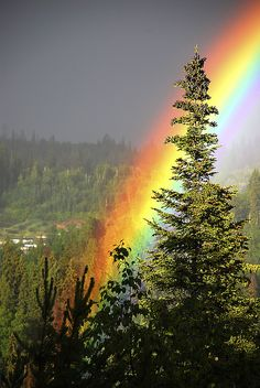 *+*Mystickal Faerie Folke*+*... Rainbow Prince George, BC...By Artist Unknown...