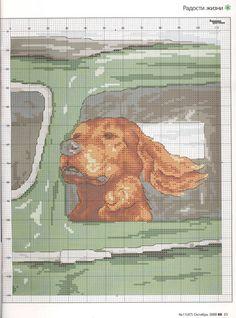 Dog in car window (bbj2238) 1/1 graph