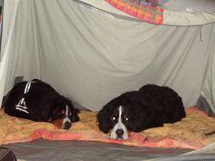 224 27-4-2011 lekker in ons slaaptentje