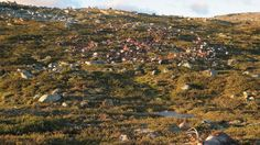 How exactly did lightning kill 323 reindeer in Norway?