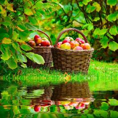 bluepueblo:    Apple Harvest, Grand Rapids, Michigan  photo via love