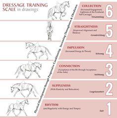 dressage training scale: rhythm, suppleness, connection, impulsion, straightness, collection