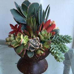 Nice succulent arrangement in a coconut shell by Anna Calderon