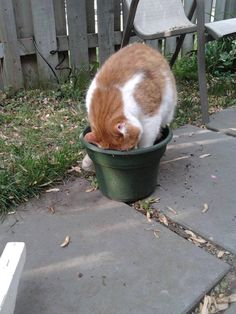 Eviter que le chat gratte la terre autour des fleurs