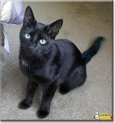 Black cat Cat from West Chester, Pennsylvania