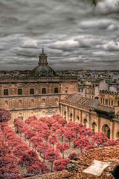 Cathedral Courtyard, Sevilla