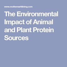 The Environmental Impact of Animal and Plant Protein Sources