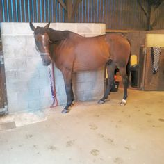 My horse Ozymandias