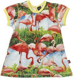 Flamingos (Molo)