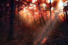 autumn fire by ildiko-neer on DeviantArt