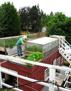Rooftop green houses