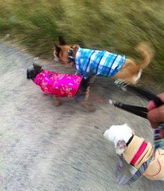 Luna, Benny y Ciry de paseo por el parque.
