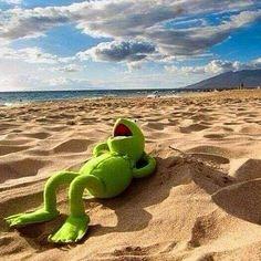 Kermit The Frog Meme, Funny Kermit Memes, Cartoon Memes, Funny Frogs, Cute Frogs, Frog Pictures, Funny Pictures, Hermit The Frog, Sapo Kermit