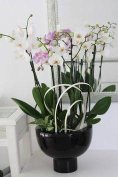 Potted flower arrangements. Special floral design