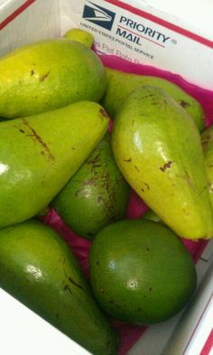 Puertorican Avocados / Aguacates de Puerto Rico...NOW THESE ARE WHAT I CALL AN AGUACATE. OMG, SE ME HACE LA BOCA AGUA