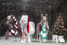 Immaculate Training Chihuahuas With Praise And Affection Ideas. Unbelievable Training Chihuahuas With Praise And Affection Ideas. Cute Horses, Pretty Horses, Horse Love, Beautiful Horses, Animals Beautiful, Baby Horses, Christmas Horses, Christmas Animals, Christmas Time