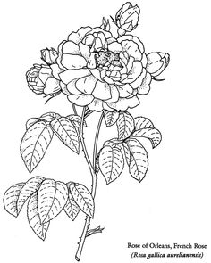 Colouring-in page - answers for samples from 'Floral Beauty Coloring Book' via Dover Publications ~s~