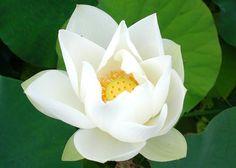 Sacred Lotus AW14-15 #elenikyriacou www.elenikyriacou.com