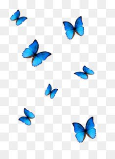 Blur Background Photography, Blue Background Images, Smoke Background, Studio Background Images, Photo Background Images, Butterfly Outline, Cartoon Butterfly, Butterfly Background, Butterfly Drawing