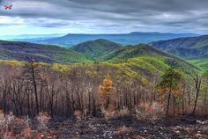 Aftermath After the Rocky Mount Fire in Shenandoah National Park  The fire burned from April 16 to April 29 2016 with a total of 10326 acres burned. This is the second largest forest fire in Shenandoah National Park history.  Photographed in the South District of Shenandoah Virginia by tpfmariah9999