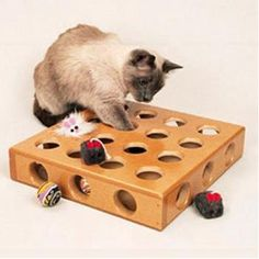 The Peek-A-Prize Toy Box is designed to build on your cat's instinct. Go ahead, partially hide some of your cat's favorite toys in this toy box and watch while he spends hours trying to fish them out. The Peek-A-Prize is especially great for those times when you have to leave your cat home alone because it will help keep your cat entertained. Rotate the toys in the box so that they are always digging for something different, and for extra fun, put a few food treats inside. Includes two fun…