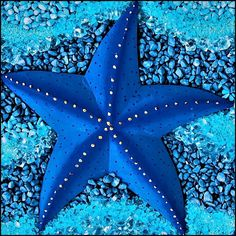 Beautiful blue sea star / Seestern