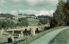 Halsan i Levanger, 1930-tallet  Hesjer på Halsan i Levanger. Bildet er tatt mellom 1936 og 1940.