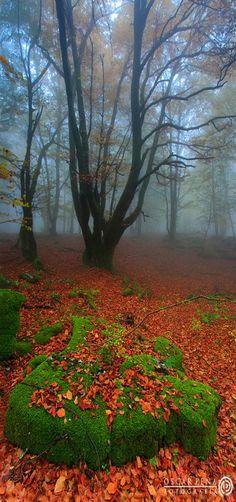 'Silent Forest' Monumento Natural del Monte Santiago, Burgos, Spain ~~by Oscar Pena~~