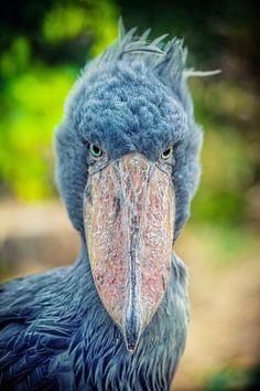 7 animaux sauvages que vous ne connaissez probablement pas... - Pour Les Curieux
