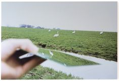 Marijke van Warmerdam - 'Duck', 2008  66 x 100 cm  screen print on plastic mirror, di-bond, edition 5