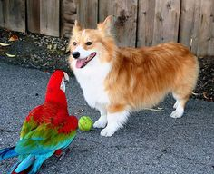 Some people on the internet are saying Corgis are overrated. Well, THOSE PEOPLE are totally wrong and here's why!