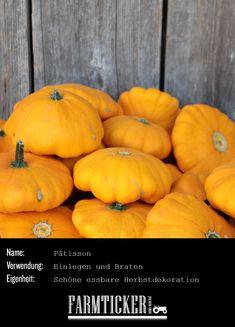 Den gab's schon immer bei Oma. Er ist nicht nur hübsch, sondern eignet sich auch zum Einmachen oder Braten. Es gibt ihn in gelb, weiss oder grün, mit oder ohne Knubbel.   Weitere Infos zu allen möglichen Kürbissorten findest du im Link! Pumpkin, Vegetables, Link, Food, Canning, Roast, Carving Pumpkins, Pickling, Autumn Decorations