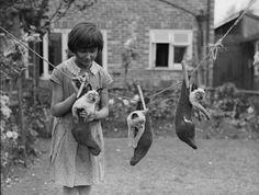 Siamese kittens on the washing line in the garden, Croydon, London, England, 1931, photographer unknown.