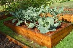 Trucs et astuces au jardin - http://eartheasy.com/blog/wp-content/uploads/2011/04/raised-beds.jpg