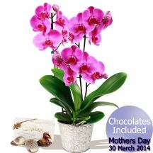 Mothers Day Orchid Plant & Chocolates