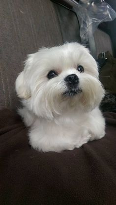 New Baby Animals Kittens Puppys Ideas Cute Dogs And Puppies, Baby Dogs, I Love Dogs, Pet Dogs, Dog Cat, Pets, Doggies, Cute Dog Pictures, Maltese Dogs