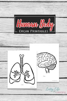 A hands-on way to learn about the human body with these large human body organs printables. Add them to your large human body outline. Human Body Organs, Human Body Unit, Human Body Systems, Preschool Science, Teaching Science, Science Activities, Science Education, Preschool Ideas, Physical Education