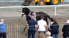 Laytown Rodeo 2014 - Here's video of the action which created now viral photo.