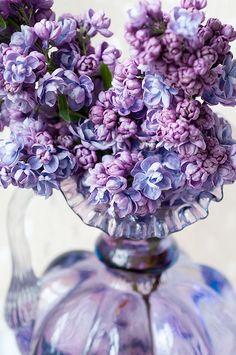 Double lilac / PURPLE!