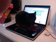 gatos en computadoras - Buscar con Google
