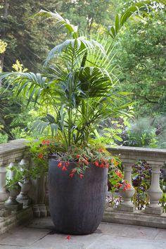 #garden #containers  http://www.pinterest.com/arizonapottery/planters-phenomenal/