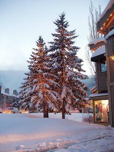 Christmas Trees in Park City, Utah