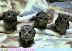 Owl Dance Party