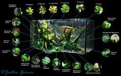 Peninsula Vivarium – Page 3 - Reptiles Tree Frog Terrarium, Gecko Terrarium, Terrarium Plants, Jar Plants, Gecko Vivarium, Reptile Room, Reptile Cage, Reptile Enclosure, Reptile Tanks